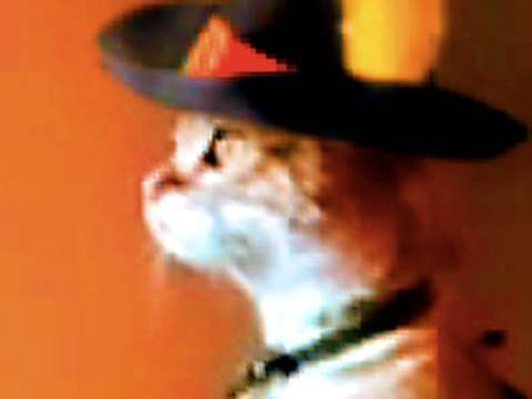 Thumb Standing Cat in Boots – Featuring Zorro Cat and Mariachi Cat