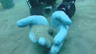 New and long video - Octopus makes its own Quicksand