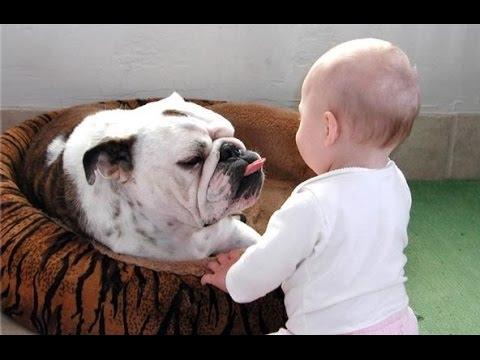 A los Bulldog les gustan los niños