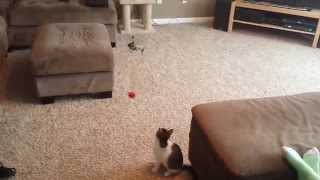 Helicopter cat toy