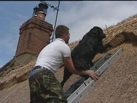 Dog climbs ladder to sit on thatched roof with best friend