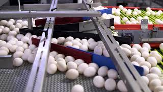 Egg Production Video