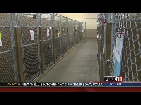 OK dogs coming to local shelter