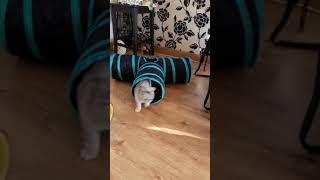 Kitten new toy