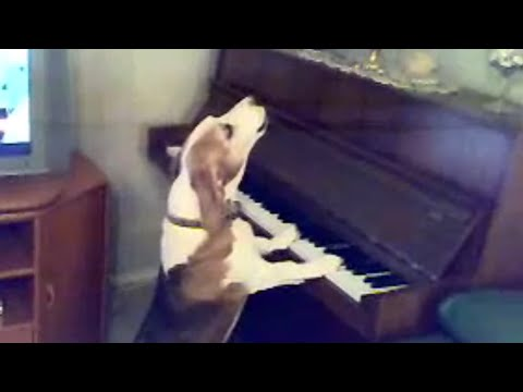 Un virtuoz al pianului