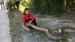The girl caught the big Python - The girl is not afraid of Snakes - Snake Catchers
