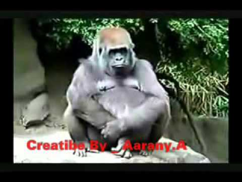 Tamil Funny Song (thavady) video