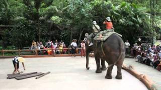 download lagu Sumatera Elephant Show Part #1 Taman Safari gratis