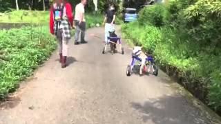 マールとよっちゃん☆始めての車椅子散歩
