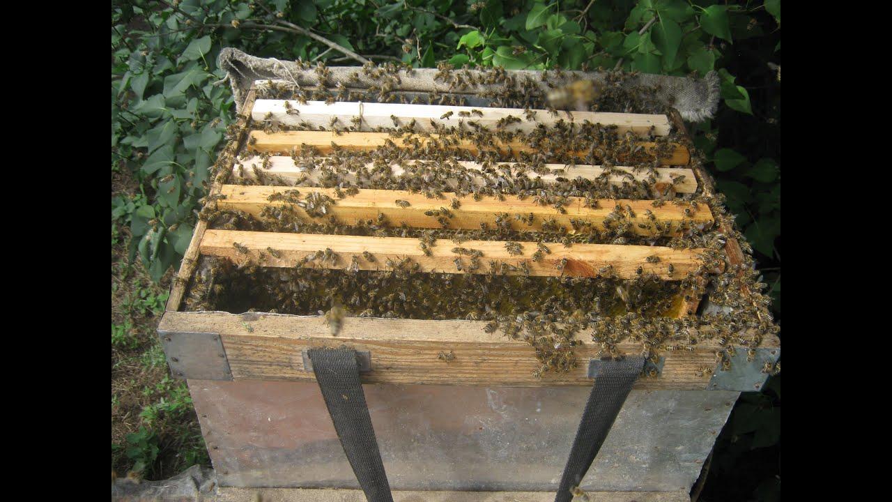 Как сажать пчел в новый улей 50