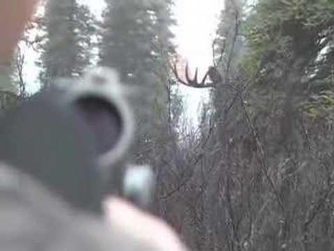 Lov losa - velký kus