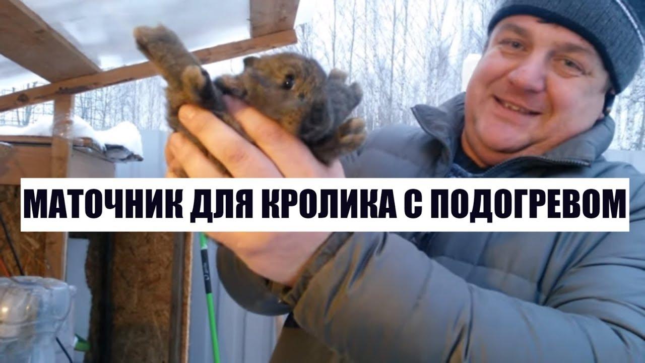 Маточник для кроликов с подогревом своими руками 918