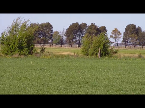 caza de liebre con galgos