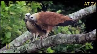 Khu Rừng Bí Ẩn Amazon Vương Quốc Báo Đốm Thế giới Động Vật Hoang Dã AMAZON Thuyết Minh