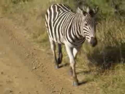 Zuid-Afrika (juli 2008)