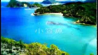 小笠原諸島の自然の画像 p1_1