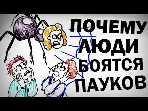 Почему люди так боятся ПАУКОВ? — Научпок
