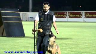 Israeldogs Macho - Winner of the Israeli Obedience Championships 2014