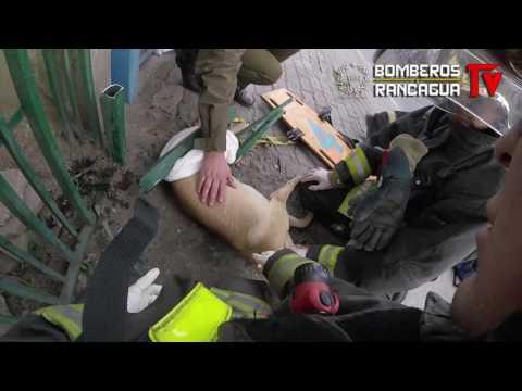 Bomberos de Rancagua rescato Perro atrapado en reja