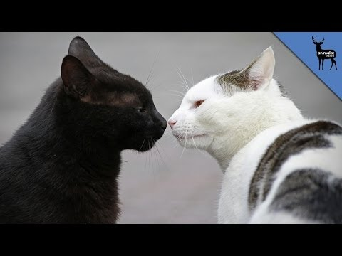 How Do Cats Communicate?
