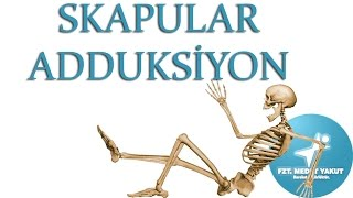 Skapular Adduksiyon ( Skapula Adduction )