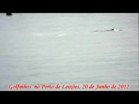 Golfinhos ( Dolphins ) em Leixões, Portugal (HD)