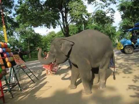 Тайские слоники .