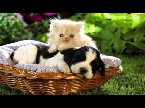 Mensagem Amizade - Amizade é tudo