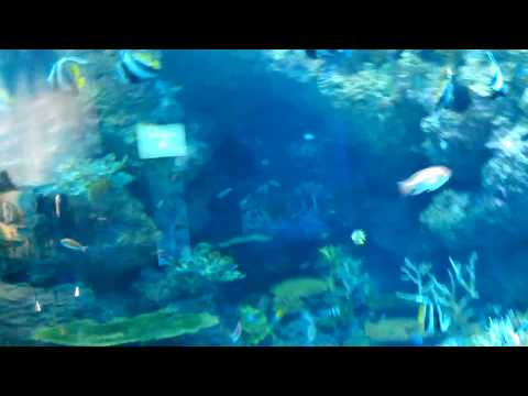 World's Largest Aquarium (South East Asia Aquarium) - A Life In Video 80