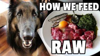 What Feeding my Dog the RAW DIET Looks Like!