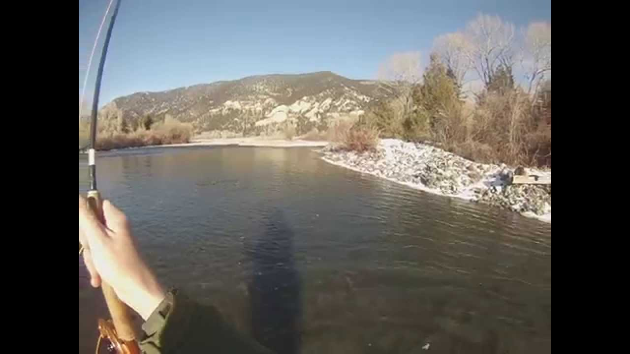 Fish on 2 28 15 yellowstone river fishing board for Yellowstone river fishing
