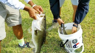 Harvesting MONSTER 10lb BASS in Buckets for POOL POND AQUARIUM!