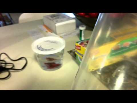 Countertop Aquaponics System : Mini Countertop Aquaponics (2/3) - YouTube