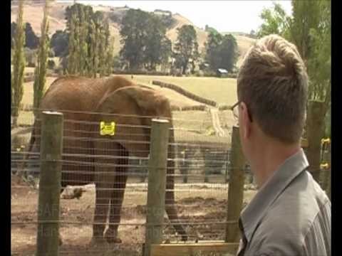 Jumbo freed from circus