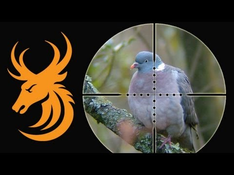 Airgun Hunting - Long range pigeons and rabbits with a Daystate Mk4 iS