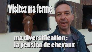 Visite de ma ferme et de mon activité pension de chevaux.