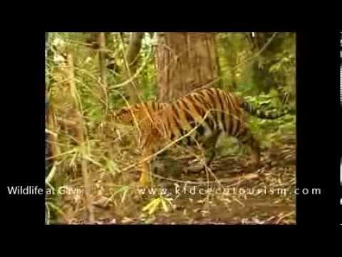 Gavi wildlife, Kerala India  - ഗവിയിലെ വന്യ ജീവികൾ