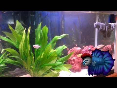 how to get rid of ammonia in your aquarium youtube