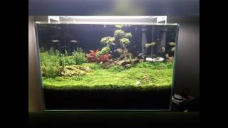 The Bonsai Tree Aquascape from TURKEY