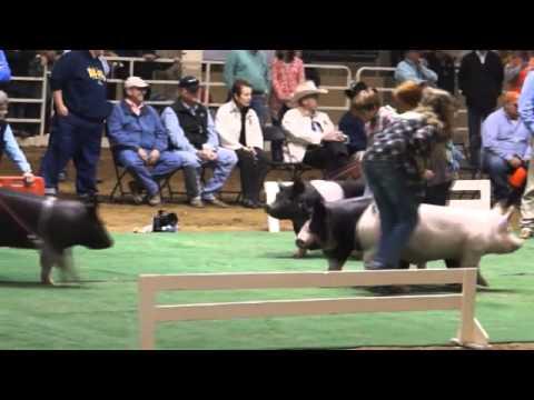 2015 NWSS Market Hog Show