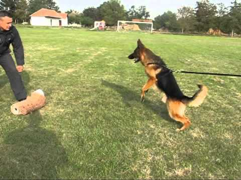 German Shepherd Police Dog Videos