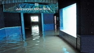 Flooded New York Aquarium May Evacuate Animals