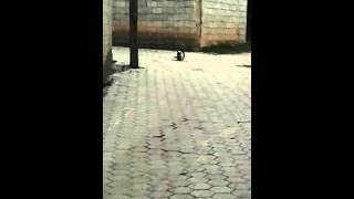 Free porno with cats hahah