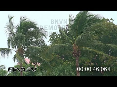 11/30/2008 HD Rain Wind Palms stock footage