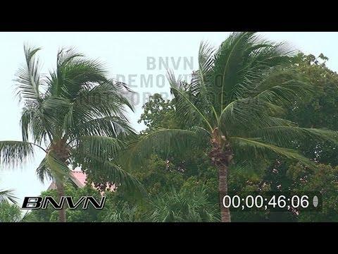 11/30/2008 HD Rain Wind Palms stock footage