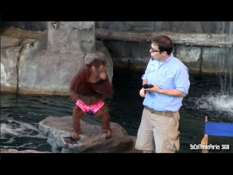 [hd] Full Animal Actors On Location! At Universal Studios Florida - Universal Orlando video