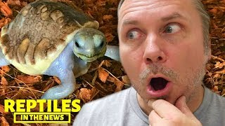 EXTREMELY RARE BABY SCALELESS TORTOISE?!!! REPTILES IN THE NEWS