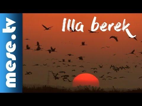 Alma Együttes: Illa berek (Hortobágyi dalok)