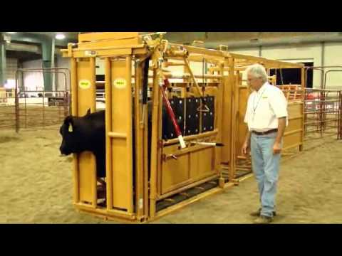 how to build a squeeze chute for goats