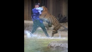 When Zoo Animals Attack Compilation Part 3